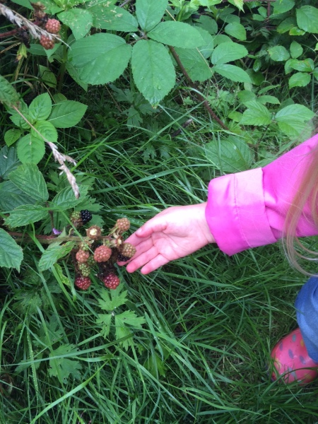 Beabop-a-loola picking Blackberries